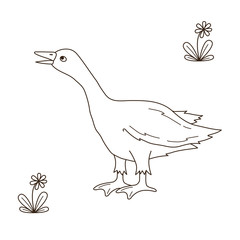 Goose bird doodle vector illustration