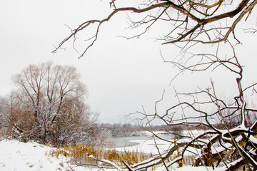 Landscape of late autumn with an old willow on the snow-covered bank of a frozen lake