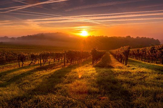 Beautiful Sunset landscape bordeaux wineyard france europe