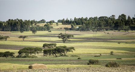 Farm fields and homes in Ethiopia