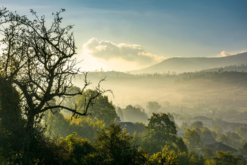 tree above the green rural valley in the morning. lovely countryside scenery