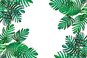 Tropical leaf nature frame layout, Monstera philodendron the evergreen vines plant on white with copy space for tropical background.
