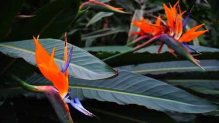 Fotomurales - Exotic flowers grow in private park, close-up photography.