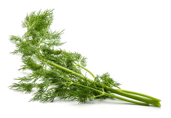 Fresh florence fennel branch isolated on white background.