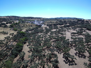 Cumbres de Enmedio es un municipio español de la provincia de Huelva (Andalucia,España)