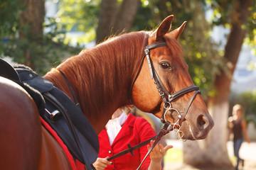 Jockey checks horse harness