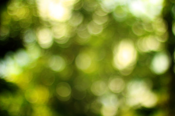 Abstract green bokeh from tree.