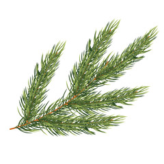 Fir Branch Isolated on White Background. Christmas Tree.