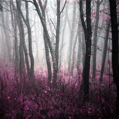 Dziki las w porannej gęstej mgle - magiczny i zagadkowy