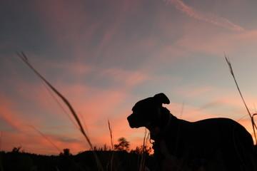 My Dog Prima