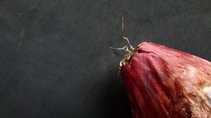 Cipolla rossa di Tropea