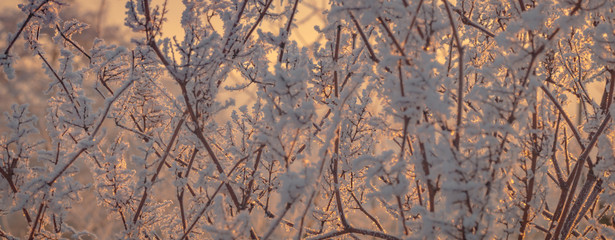 Äste im Winter mit Raureif und Eiskristallen bei Sonnenaufgang