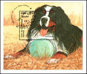 CAMBODIA - CIRCA 1990: postage souvenir sheet, printed in Cambodia, shows a Bernese Dog