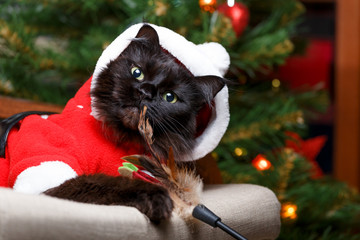 Image of black cat in Santa costume in armchair