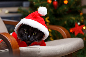 New Year's image of black cat in Santa costume