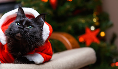 Portrait of New Year cat in Santa costume sitting at chair
