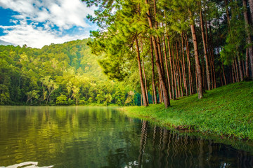 Pine tree forest scene and lake rural scene nature background