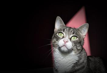 Cat protrait