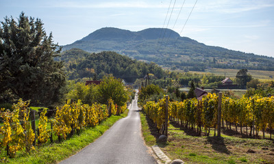 Photo sur cadre textile Colline Badacsony wine hill