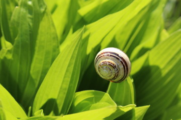 A snail on a leaf in St. Gallen, Switzerland.