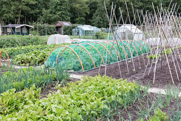 Allotment garden in early spring with onions, beets and cauliflower