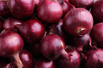 Red onion, close up Wall mural