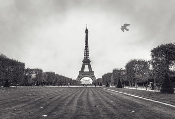 Eiffel tower in Paris at rainy autumn evening.