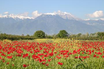 Der Olymp im Frühling, Mount Olympus