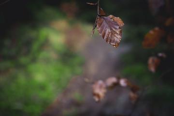 Pojedynczy liść, w lesie Harz