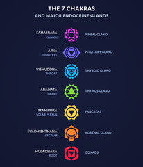 Chakra system infographic