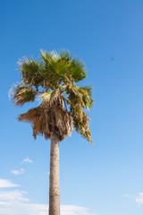 Palm tree on blue sky background. Summer sunny day.
