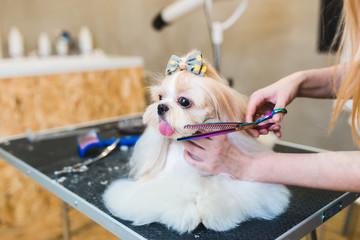 Female groomer brushing Shih Tzu at grooming salon.