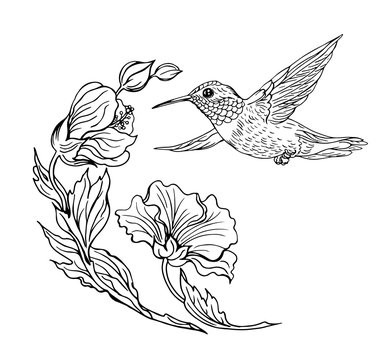 Hummingbirds and flowers, black and white contour drawing.