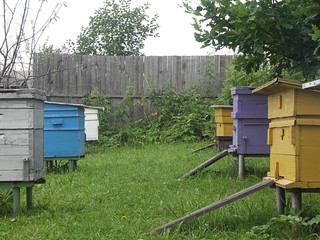 Hives in an apiary with bees. Apiculture