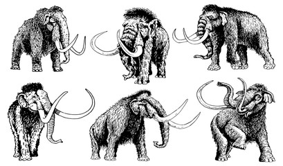 Graphical set of mammoths isolated on white background,vector Wall mural