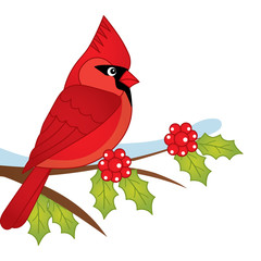 Vector Cartoon Cardinal Sitting on Holly Tree Branch