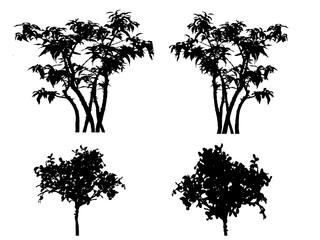 silhouette tree on white backgfround