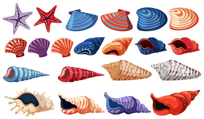 Different types of seashells on white background