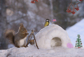 squirrel with igloo and a great tit