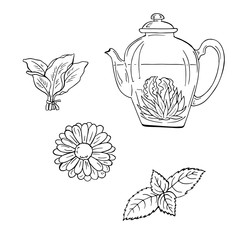 Teapot with tea and herbs sketch. Hand drawn vector illustration. Cartoon ink sketch.