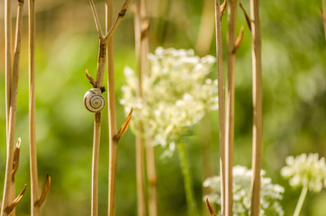 Snail on the grass