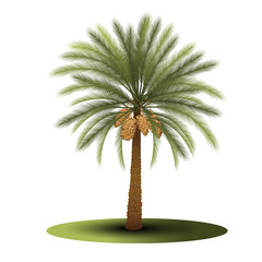 palm tree with green leaves and dates