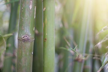 Bamboo tree with lighting.
