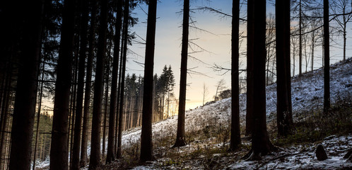 deer and tree silhouette in winter forest