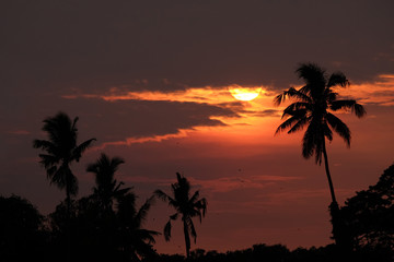 Silhouette of sugar palm trees in countryside during sunset