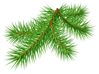 Green pine branch on white background