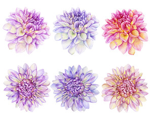 Set beautiful purple, pink Dahlia flower. Garden closeup dahlia. For wedding, invitation, Valentine's Day, Mother's Day. Watercolor hand drawn painting illustration isolated on white background.