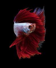 Poster Fish Red dargon