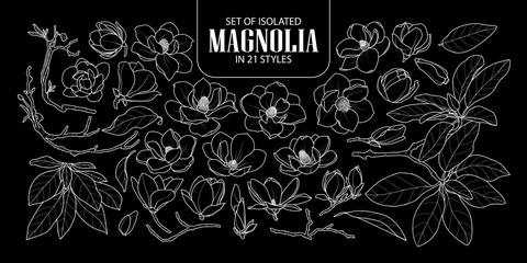 Set of isolated magnolia in 21 styles. Cute hand drawn flower vector illustration only white outline.