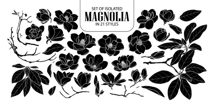 Set of isolated silhouette magnolia in 21 styles. Cute hand drawn flower vector illustration in white outline and black plane.